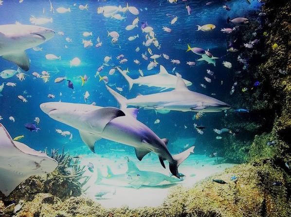 Upcoming Aquarium on Mississippi GulfCoast